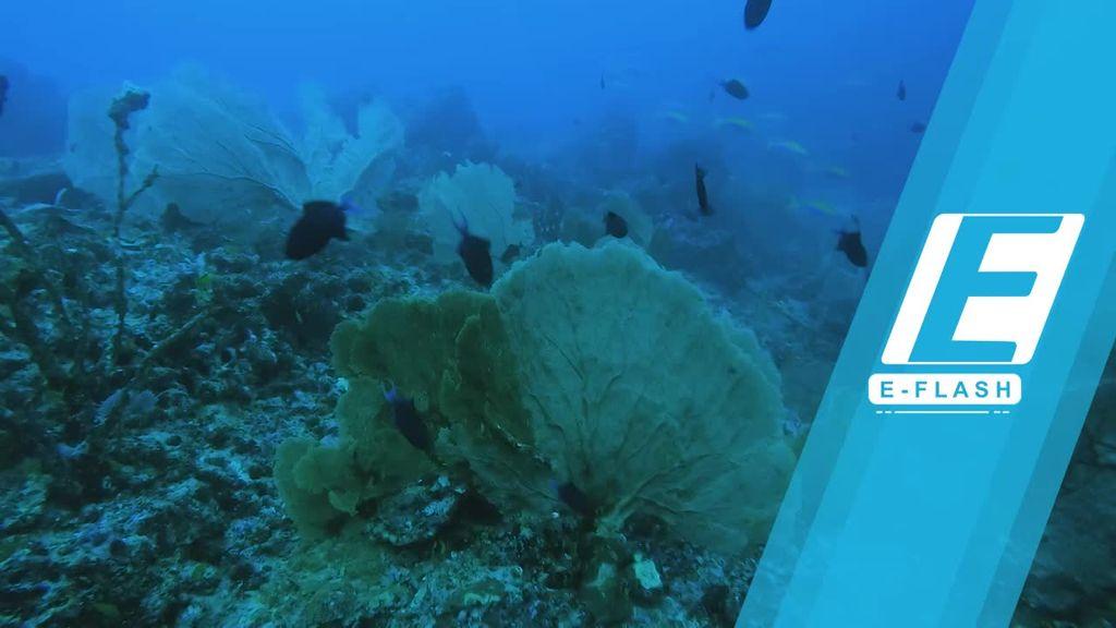 Menengok Bawah Laut Arus Balee yang Memukau