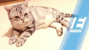 Kenalan dengan Luhu si Kucing Berwajah Sedih