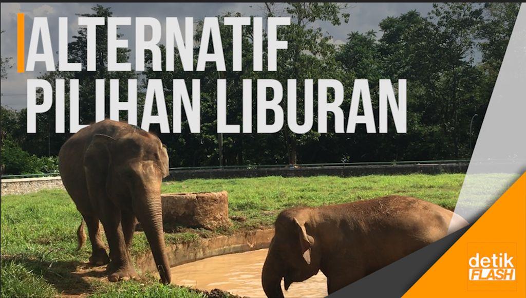 Kebun Binatang Ragunan Ramai Didatangi Wisatawan