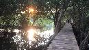 Pesona Hutan Mangrove di Tengah Ibu Kota Jakarta