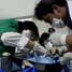 Para petugas memeriksa terlebih dahulu sebelum melakukan sterilisasi kucing betina (mengangkat rahim) dan kastrasi (kebiri) kucing jantan.
