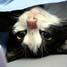 Mata birunya menatap kosong. Keempat kakinya diikat serta perutnya dibelah. Itulah prosesi pengebirian kucing oleh para tenaga medis.