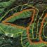 Lafal Allah tersebut persisnya berada dekat perbatasan Aceh-Sumut. (Google Earth).