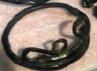 Di pameran ini juga dijual pernik-pernik khas belitung lainnya, salah satunya akar bahar.