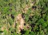 Selain merusak ekosistem hutan dan mengundang bencana, aksi pembalakan liar ini juga merugikan negara. (Dok Pemkab Meranti).