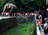 Warga melihat gajah di Kebun Binatang Ragunan, Jakarta, Minggu (15/7/2012).