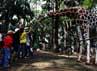 Pengunjung bisa secara gratis melihat koleksi binatang yang ada di Ragunan.
