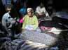 Gempa tersebut mengakibatkan sedikitnya 220 orang tewas. AFP/Mehr News/Mahsa Jamali.