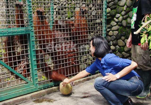 Gunungan Buah Untuk Orangutan