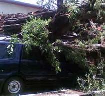 Pohon Tumbang Timpa Mobil