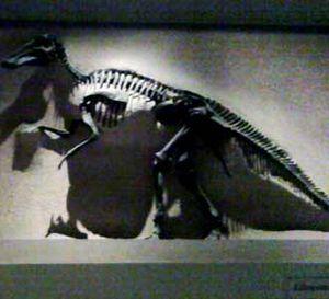 Melihat Fosil Dinosaurus