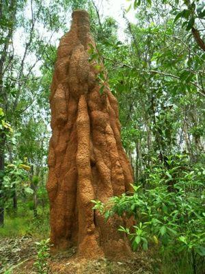 Uniknya Taman Nasional Wasur