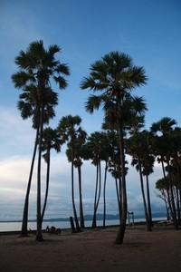 Pantai Lasiana dengan Pohon Lontar