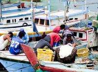 Sejumlah nelayan sedang membuka jala hasil tangkapan mereka. Dalam semalam mereka dapat menangkap ratusan ketam (kepiting) untuk kemudian dijual ke Kota Tanjungpandan.
