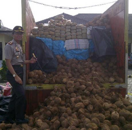 Penyelundupan 3,5 Ton Ganja Ditutupi Kelapa Digagalkan