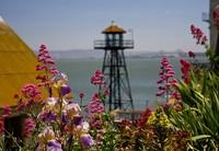 Bunga di taman Pulau Alcatraz (en.wikipedia.org)