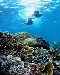 Terumbu karang di Amed