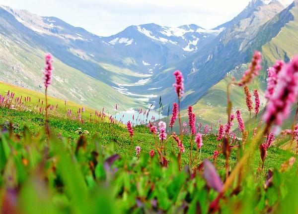 Keindahan Valley of Flowers (wayfaring.info)