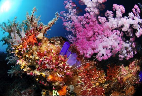 Alam bawah laut Pulau Maratua (sumber: maratua.com)