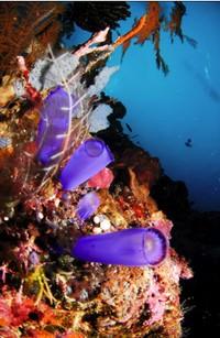 Cantiknya bawah laut Maratua (sumber: maratua.com)