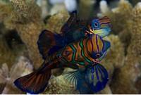 Ikan di Maratua (sumber: maratua.com)