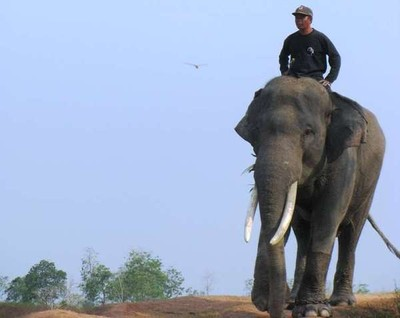 Gajah-gajah Lucu di Way Kambas