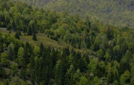 Polisi Rusia Temukan 248 Embrio Manusia di Hutan
