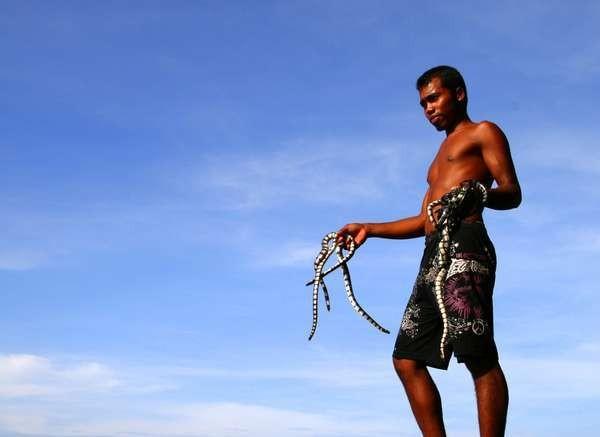 Meski beracun tak satu pun ular laut di pulau ini yang menggigit (Yudi Febrianda/d'Traveler)