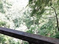 Hutan di Curug Lawe Semarang