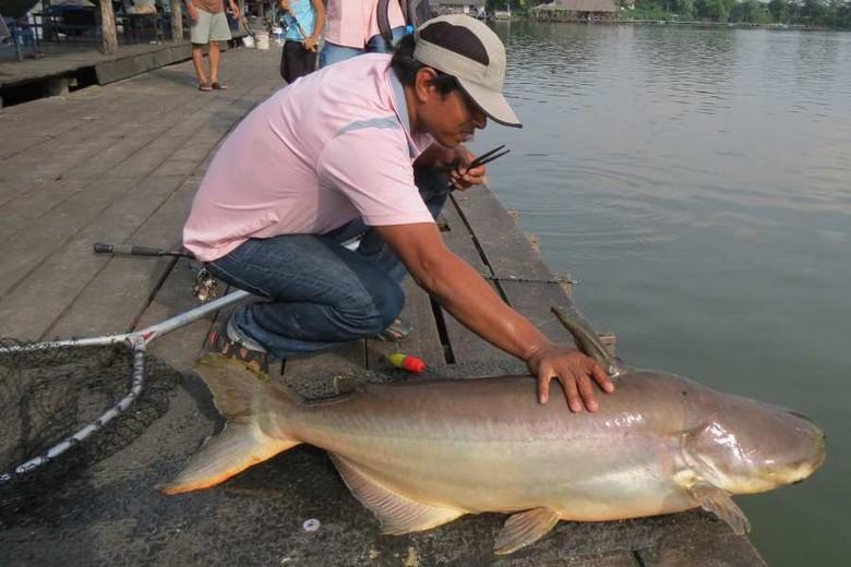 Ikan Catfish Delta Mekong yang sebesar anjing (Fitraya/detikTravel)