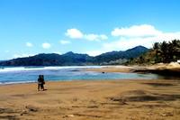 Pohon kelapa di bibir pantai (foto:Wendy S)