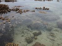 Terumbu karang menyembul ke permukaan ketika surut