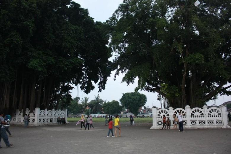 Pohon beringin kembar yang menjadi garis finish (Dicky/detikTravel)