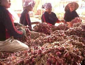 RI Impor Bawang Merah Rp 400 Miliar dari Thailand, Malaysia & Vietnam