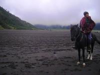 Kuda Bromo