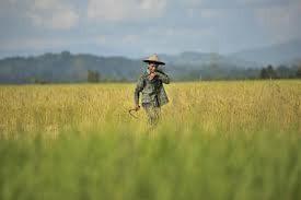 SBY Beri Tunjangan Jabatan PNS Penyuluh Pertanian Hingga Rp 1,5 Juta/Bulan