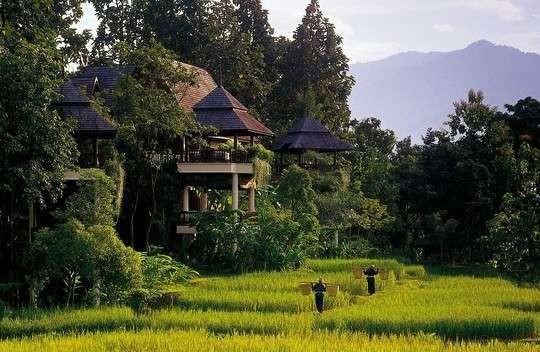 Hijaunya alam Chiangmai (skvots.ne)