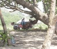 Tiduran di pohon di tepi pantai, menyenangkan bukan?