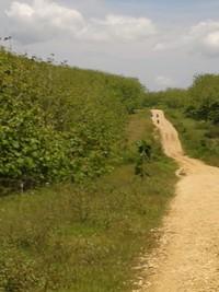 Nah, ini medan off road menuju Pantai Ngantep!