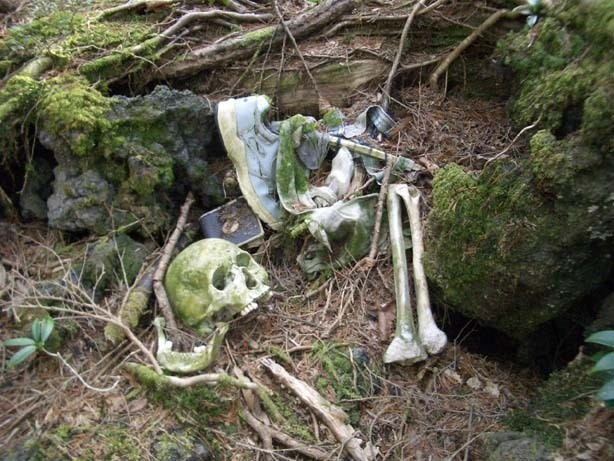 Hutan Aokigahara (cogitz.com)
