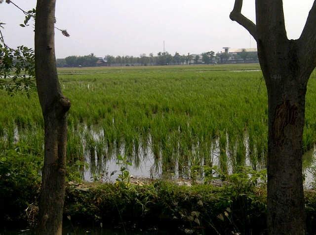 Hari Ini Dimulai Sensus Pertanian 2013