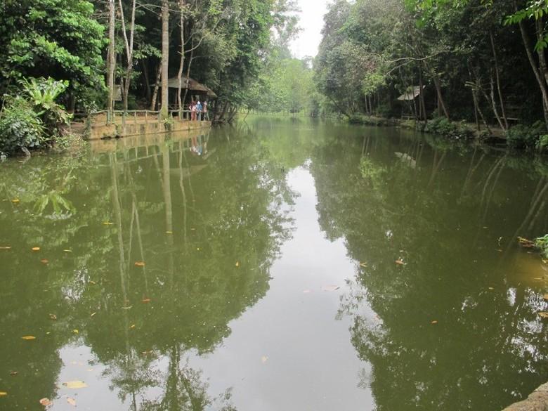 Kolam alami penuh arwana di Hutan Wisata Mata Kucing, Batam (Sastri/ detikTravel)