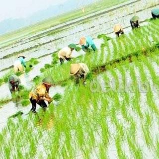 30 Juta Hektar Lahan Potensial di Indonesia Menganggur