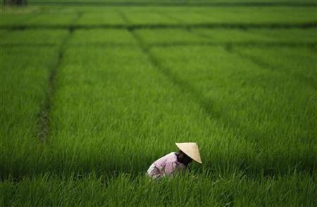 Indonesia Masih Getol Impor Beras dari 5 Negara Ini