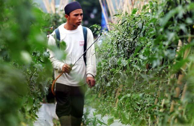 Jumlah Petani Menurun, Tapi Produksi Pertanian RI Meningkat