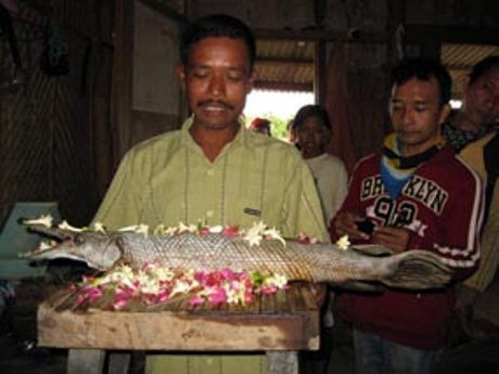 Ikan Aligator Berkeliaran di Waduk Jatiluhur