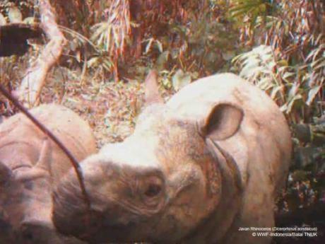 Menimbang Perlunya Hutan Kedua untuk Badak Jawa