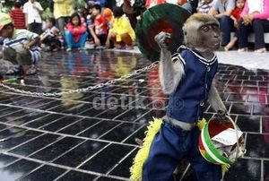 Topeng Monyet Banyak yang Infeksi Gusi, Dikhawatirkan Rabies