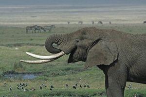 Jejak Terorisme di Bisnis Gading Gajah