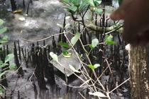 Yang Beda di Bali, Bertualang ke Hutan Mangrove